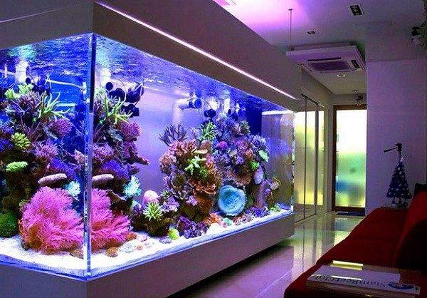 đèn led bể cá hồ thủy sinh